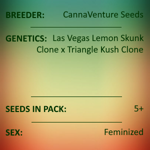 CannaVenture Seeds - LVTK Feminized