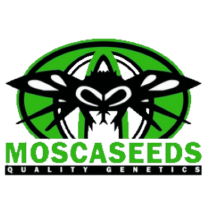 Mosca Seeds - Cannabis Seed Breeder, Cannabis Genetics