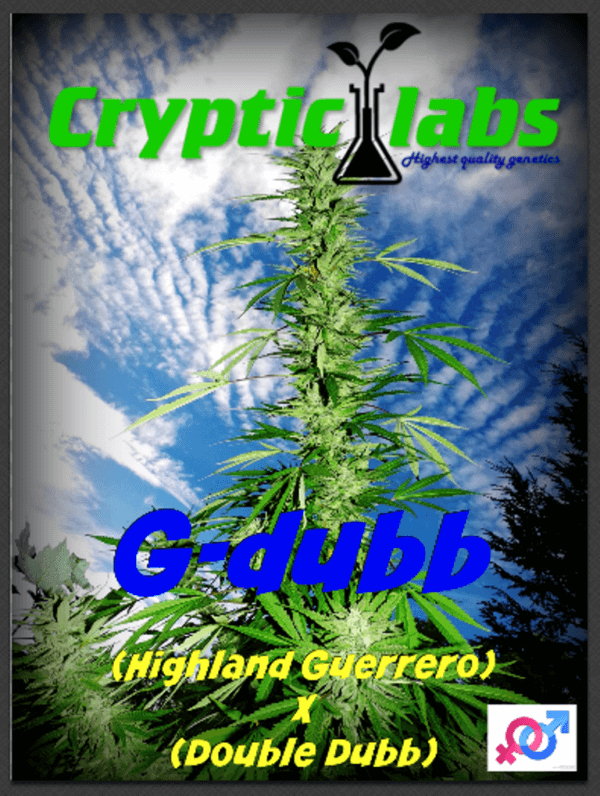 Cryptic Labs - G-dubb