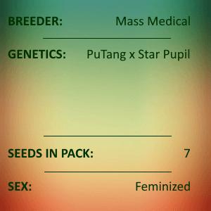 Mass Medical - Grape Pupil Fem