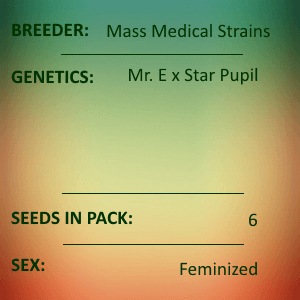 Mass Medical Strains - Mr E Pupil Feminized