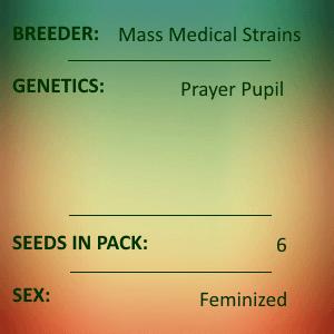 Mass Medical Strains - Prayer Pupil Feminized