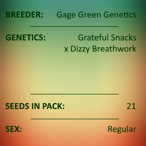 Gage Green Genetics - Angel 21 seeds