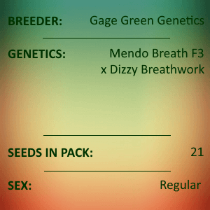Gage Green Genetics -Dream 21 seeds