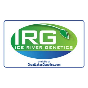Ice River Genetics - Cannabis Seed Breeder, Cannabis Genetics