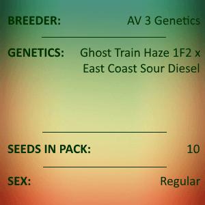 AV 3 Genetics - Sour Daze