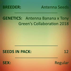 Antenna Seeds-Gorilla Banana