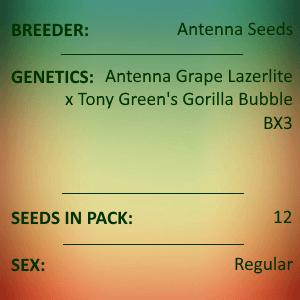 Antenna Seeds-Gorilla Grape Lazerlite