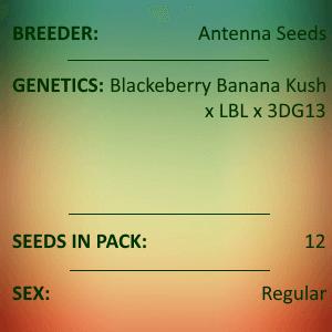 Antenna Seeds-Pineapple Headgames 2