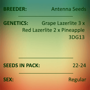 Antenna Seeds-Purple Lazerlite 3