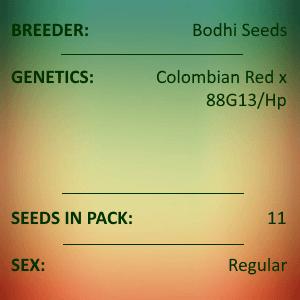 Bodhi Seeds - Aluna