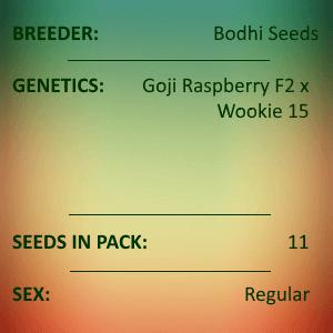 Bodhi Seeds - Black Raspberry