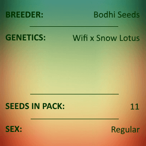 Bodhi Seeds - Joy Stick