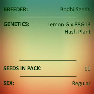 Bodhi Seeds - Lemon Hashplant V2