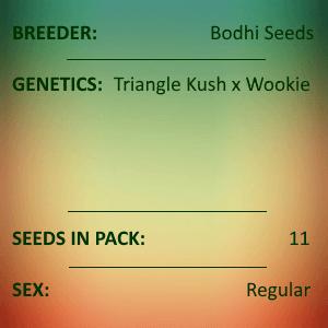 Bodhi Seeds - Phone Home