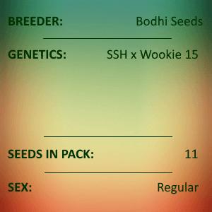 Bodhi Seeds - Pinball Wizard