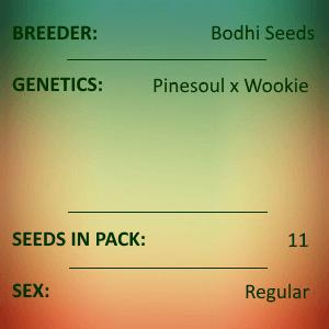 Bodhi Seeds - Soul Mate