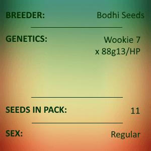 Bodhi Seeds - Wookie Hashplant