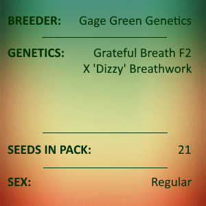 Gage Green Genetics - Echoing Green 21 seeds
