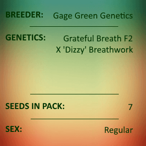Gage Green Genetics - Echoing Green 7 seeds