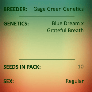 Gage Green Genetics - Lucid Blue