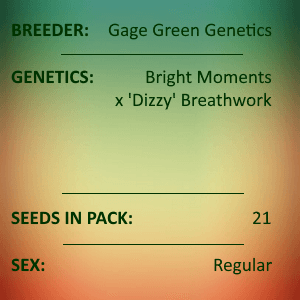 Gage Green Genetics - Luminary 21 Seeds