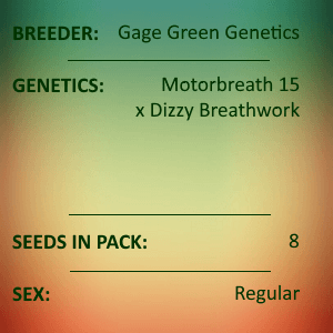 Gage Green Genetics - Mo Lune Day 8 Seed Pack