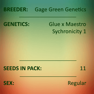 Gage Green Genetics - Syncretism No 1 11 Seed Pack