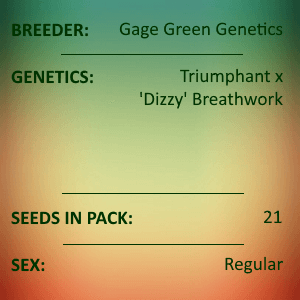 Gage Green Genetics - Tyger 21 Seeds