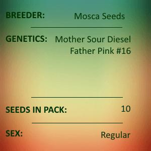 Mosca Seeds - Boom Boom