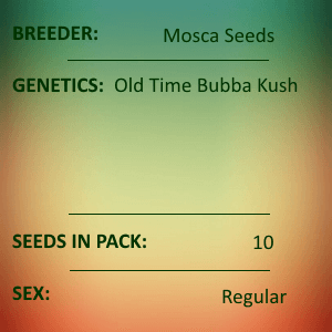 Mosca Seeds - Old Time Bubba Kush