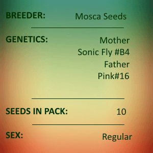 Mosca Seeds - Pineapple Mayham