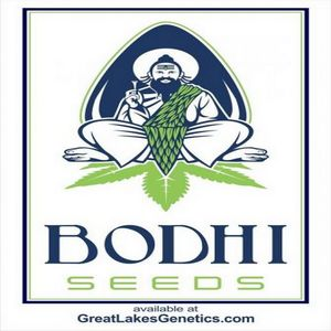 Bodhi Seeds - Cannabis Seed Breeder | Cannabis Genetics