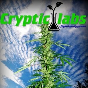 Cryptic Labs - Cannabis Seed Breeder, Cannabis Genetics