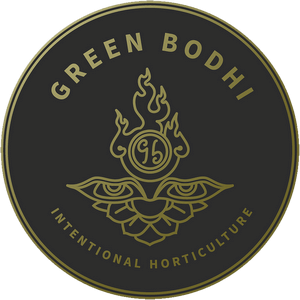 Green Bodhi - Cannabis Seed Breeder, Cannabis Genetics
