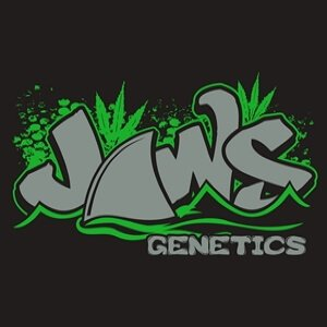 Jaws Genetics - Cannabis Seed Breeder, Cannabis Genetics