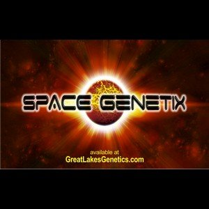 Space Genetix - Cannabis Seed Breeder