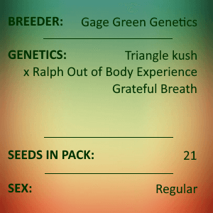Gage Green Genetics - Focus 21 seed pack