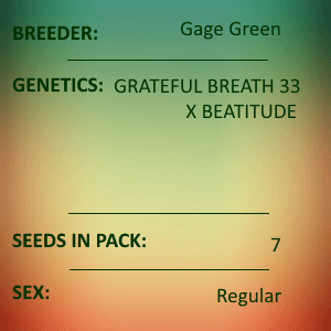 Gage Green-Rhapsody in Green 7 seed pack