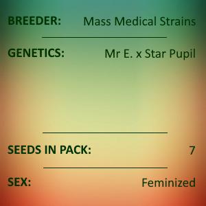 Mass Medical Strains - Mr. E Pupil