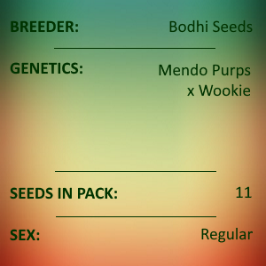 Bodhi Seeds - Midnight Cowboy