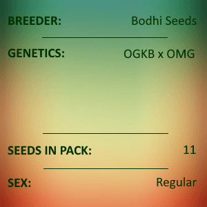 Bodhi Seeds - Tiger Tail