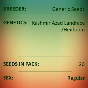 Kashmir Azad Landrace/Heirloom