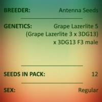 Antenna Seeds - Grape Lazerlite 6