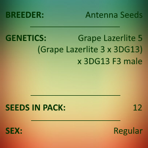 Antenna Seeds - Grape Lazerlite 6