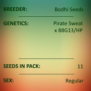 Bodhi Seeds - Booty
