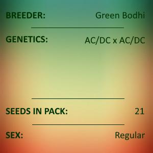 Green Bodhi - AC/DC x AC/DC