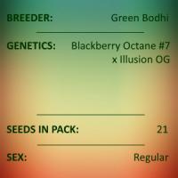 Green Bodhi - Blackberry Octane #7 x Illusion OG