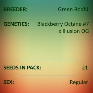 Green Bodhi - Blackberry Octane #7 x Illusion OG
