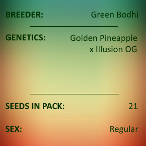 Green Bodhi - Golden Pineapple x Illusion OG